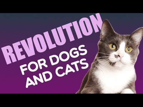 Revolution For Dogs And Cats Heartworm Flea Tick