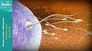 Těhotenství týden po týdnu: Oplodnění