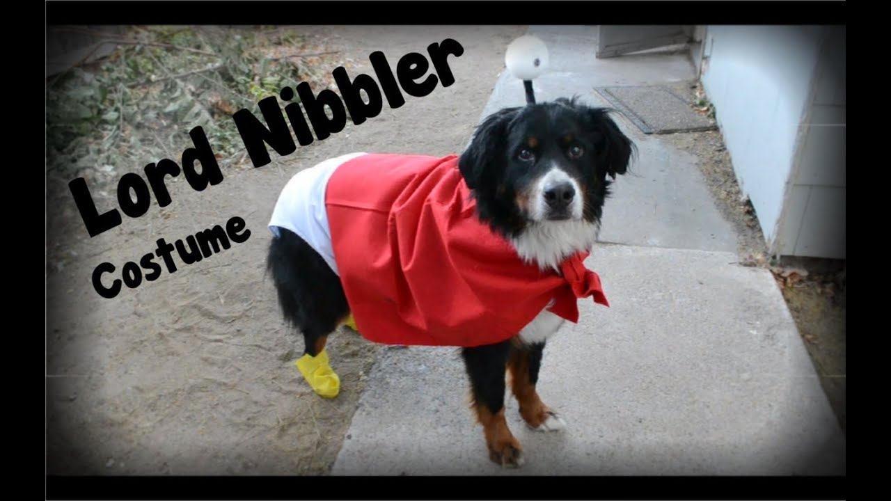 How to Make a Nibbler Costume for Dogs - YouTube