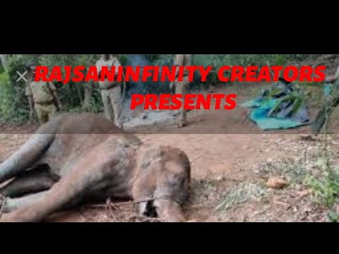 Elephant attack kerala thrissur thiruvthra Temple - YouTube  Kerala Elephant Attack Youtube