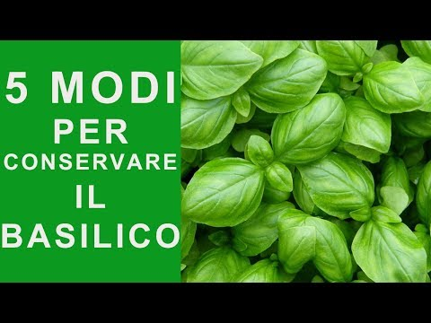 BASIL: 5 WAYS TO STORE BASIL AND ALWAYS HAVE IT GREEN AND FRESH | FoodVlogger