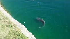 Big catfish pacana park maricopa, az