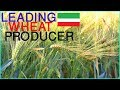 Top 10 Highest Wheat Producing Countries In The World