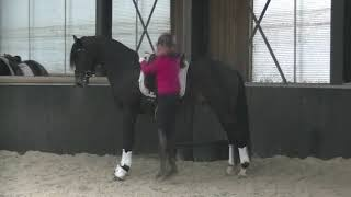 ****expressive moving 3 y old dressage gelding by Schwarzgold-Apache for sale