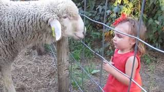 Try Not To Laugh Watching best Animal Fails Compilation Funniest !!!!!