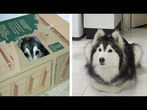 Как ведет себя собака