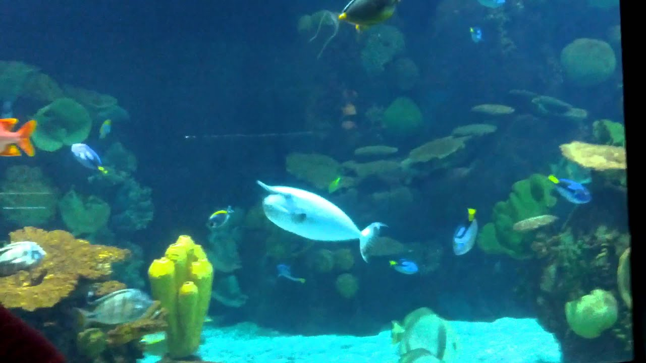Columbus Zoo Aquarium Youtube
