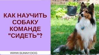 """Как научить собаку команде """"сидеть""""? Учим команде """"сидеть"""" правильно"""