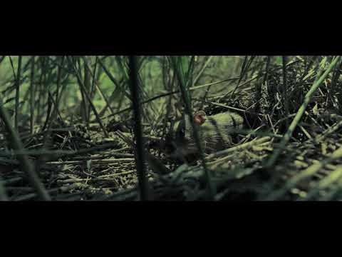 电影预告《八佰》- 中国式史诗级战争片,将于2019年9月上映。
