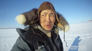 Fishing ловим трофейных горбачей (окунь) Якутия Yakutia