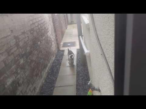 Pestbye Jet Spray Cat Water Repellent In Action