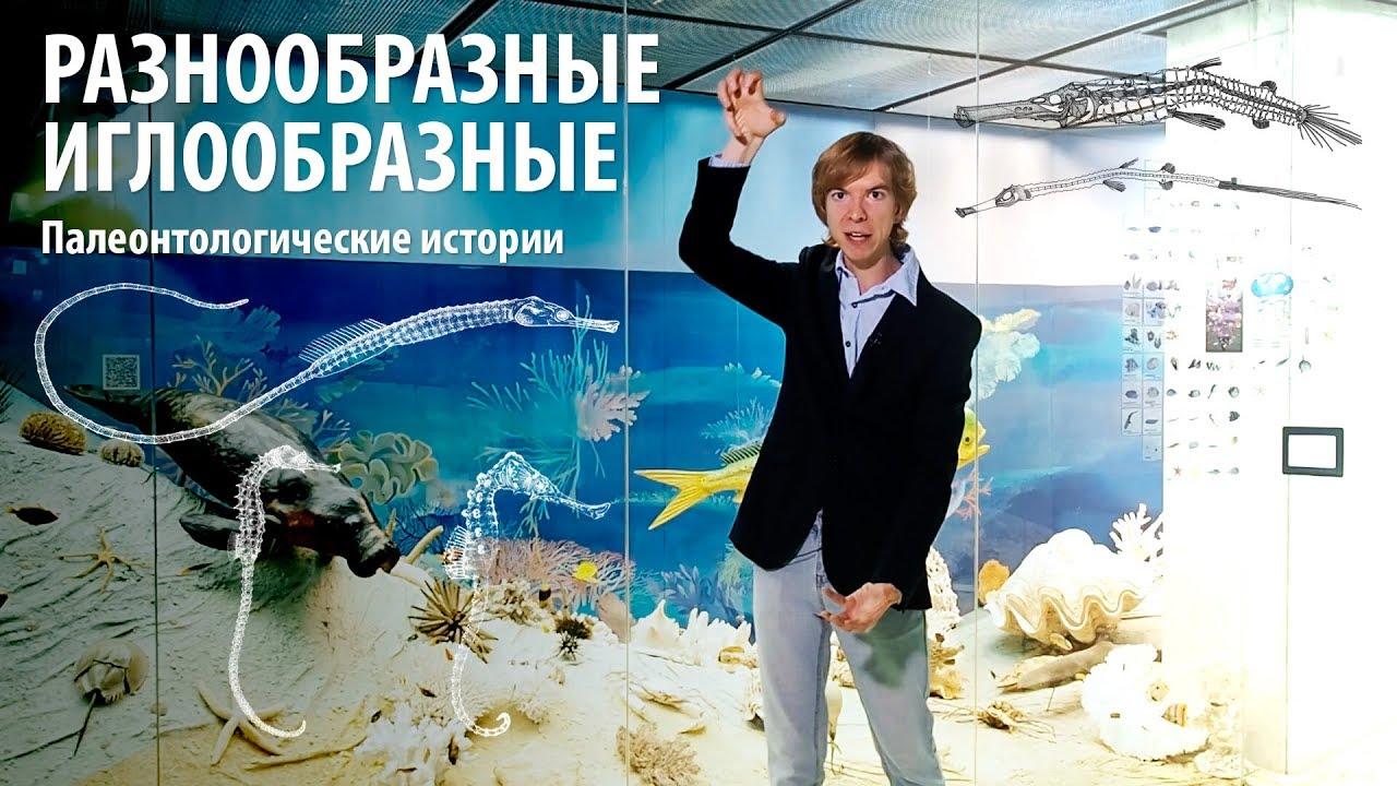 РАЗНООБРАЗНЫЕ ИГЛООБРАЗНЫЕ. Ярослав Попов | Палеонтологические истории #013