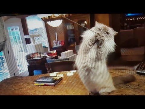 Cutest Mini Cat Pumkin