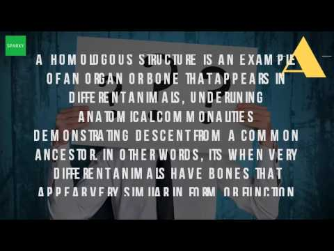 What Are The Homologous Organs Youtube