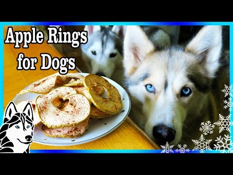 DIY APPLE RINGS FOR DOGS  🍏 | DIY Dog Treats  | Snacks with the Snow Dogs 83