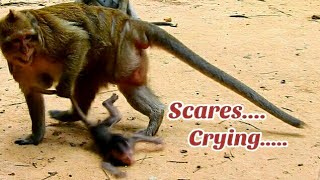 Pity Baby Charlee was Draged by By Cruel Monkey Brinn too Hard, Baby Charlee Cry off & On