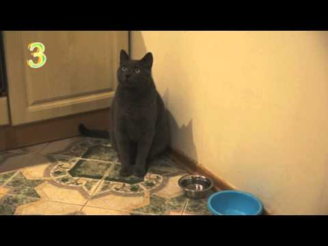 Cat asks for food by pointing at his bowl funny