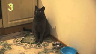 Cat asks for food by pointing at his bowl funny thumbnail