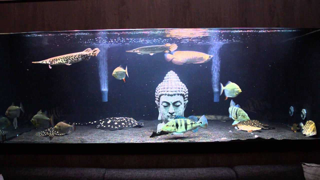 Monsterfishkeepers 500 gallon community fish tank youtube for Youtube fish tank