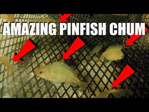 Gopro Inside Pinfish Trap, AMAZING Chum Mix For Baitfish