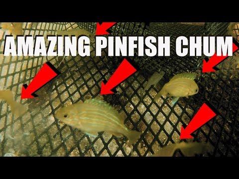 Gopro Inside Pinfish Trap, AMAZING Chum Mix For Baitfish