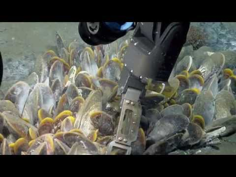 Unexpected Biology in the Gulf of Mexico | Nautilus Live