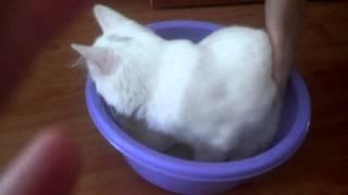 Кошачий туалет - быстро, просто, удобно.