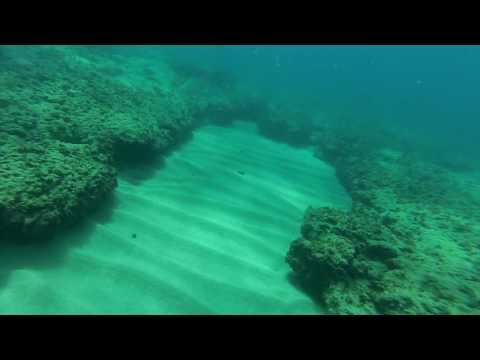 Free Diving in Naqoura Lebanon (Baby Stingray)