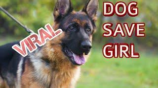 Dog save girl  - viral video # intelligent dog #save life #clever Dog