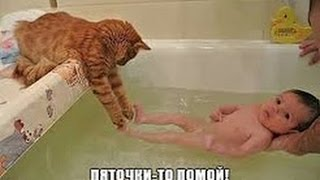 Подборка Смешная Супер Котята...