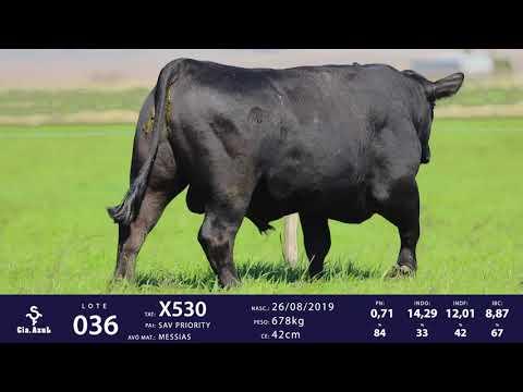 LOTE 36 - TAT X530