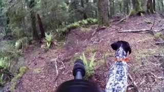 Sika Hunting With A Gsp