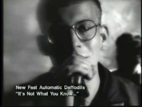New Fast Automatic Daffodils   It's Not What You Know