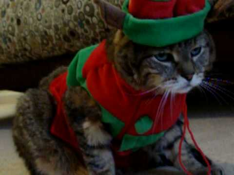 Cat hates Christmas outfit ! - YouTube