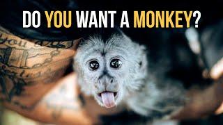 Monkeys are not Pets! - Dęan Schneider