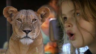 Children Watch Lion Kill Zebra - This Wild Life - BBC Earth thumbnail