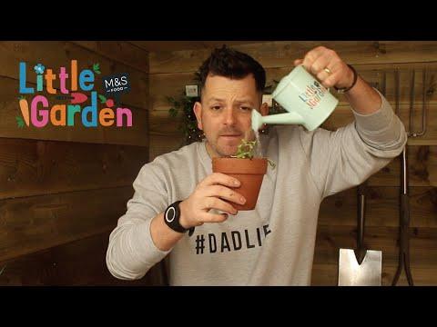 M&S   The Skinny Jean Gardener's Review of Little Garden Ep2