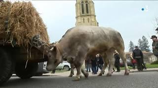 Fête des bœufs gras de Grignols