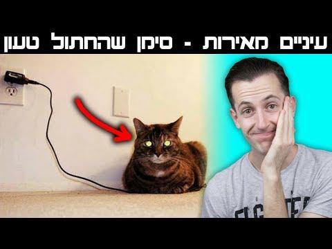 האמת הנסתרת על חתולים