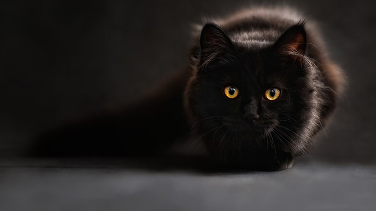 25 Surprising Origins Of Today S Most Popular Superstitions Youtube