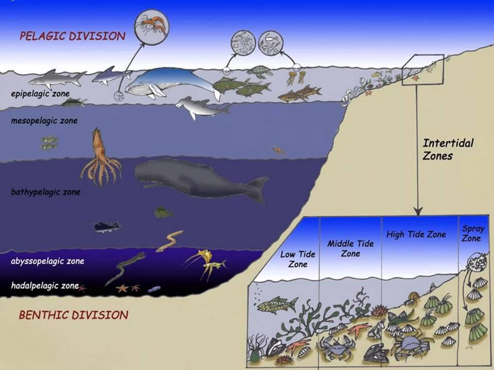 Ocean Zones Youtube