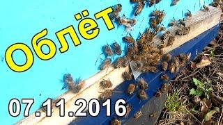 Пчеловодство, Осенний облет пчел, Леток в улей заградил от мышей.(Видео ролик о пчеловодстве, Сегодня 07.11.2016 состоялся полноценный облёт всей пасеки, так же в видео о пчелах..., 2016-11-07T18:34:18.000Z)