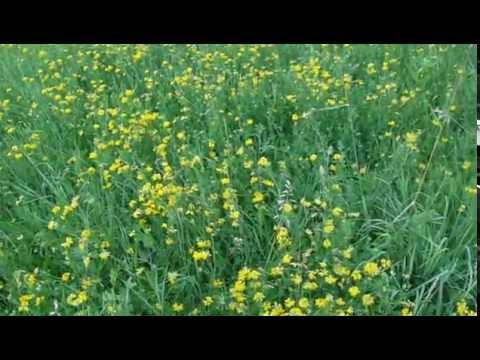 Луговые цветы желтые!