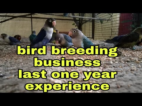 Bird Breeding Business    My Experience In Breeding In One Year    Profit Or Loss?