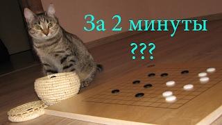 Объяснение правил игры Го за 2 минуты