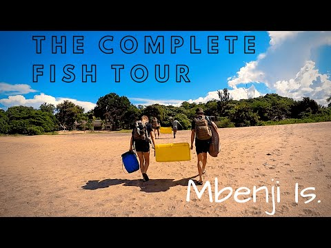 Mbenji Is. - The Complete Fish Tour - The Lake Malawi Experience #9