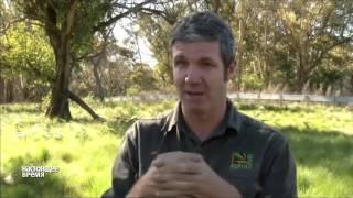 В Австралии возрождают популяцию тасманских дьяволов