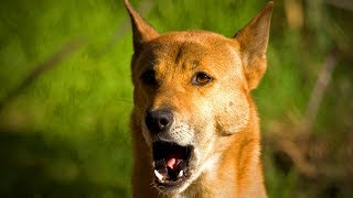 Funny Dogs Making Sounds 😂🐶 Dogs Making Cute and Funny Noises (Full) [Funny Pets]