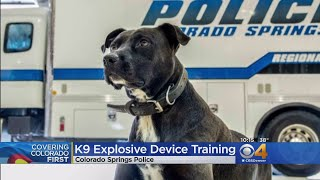 Police K9s Wrap Up Explosive Device Testing & Training