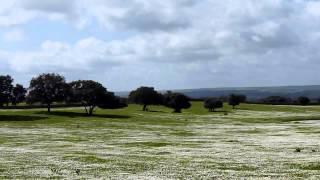 Blühende Steppe / Steppe en fleurs/ Flower carpet